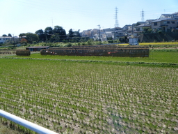 境川の田んぼ200910