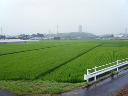 Yabitsu20090802Tanbo