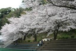 城山陸上競技場の桜