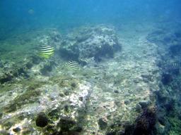 江津良の海中